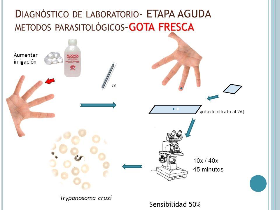 GOTA FRESCA D IAGNÓSTICO DE LABORATORIO - ETAPA AGUDA METODOS PARASITOLÓGICOS -GOTA FRESCA Aumentar irrigación Sensibilidad 50% 10x / 40x gota de citr