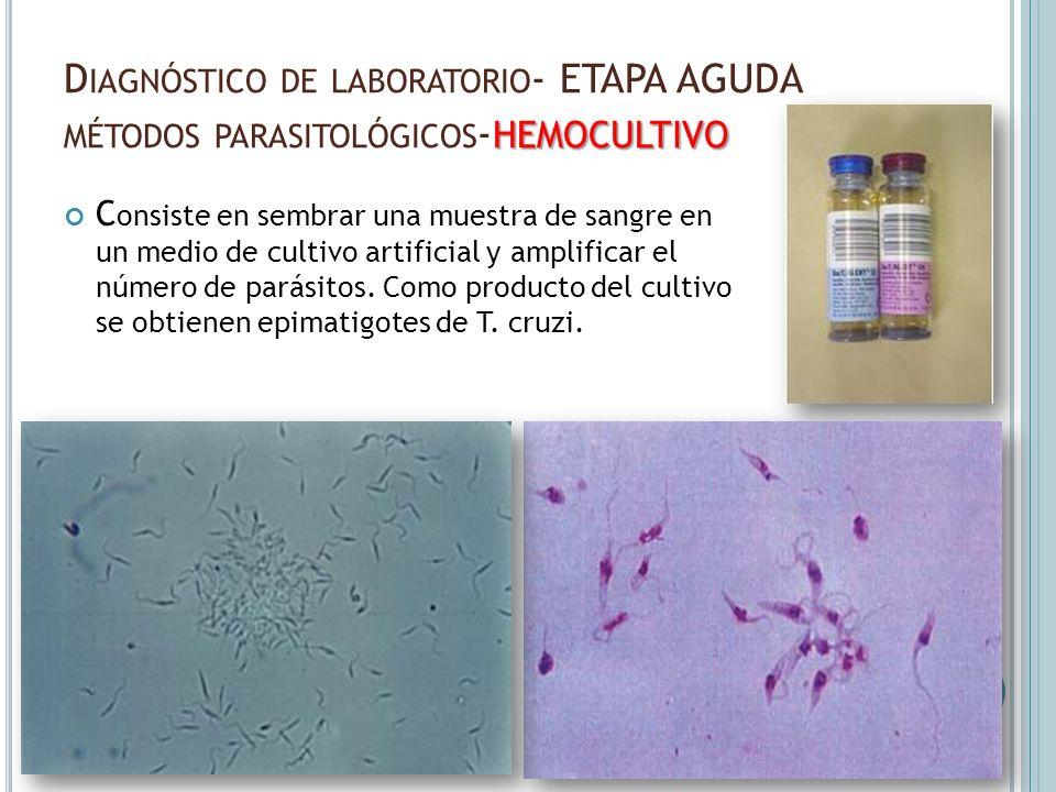 HEMOCULTIVO D IAGNÓSTICO DE LABORATORIO - ETAPA AGUDA MÉTODOS PARASITOLÓGICOS - HEMOCULTIVO C onsiste en sembrar una muestra de sangre en un medio de
