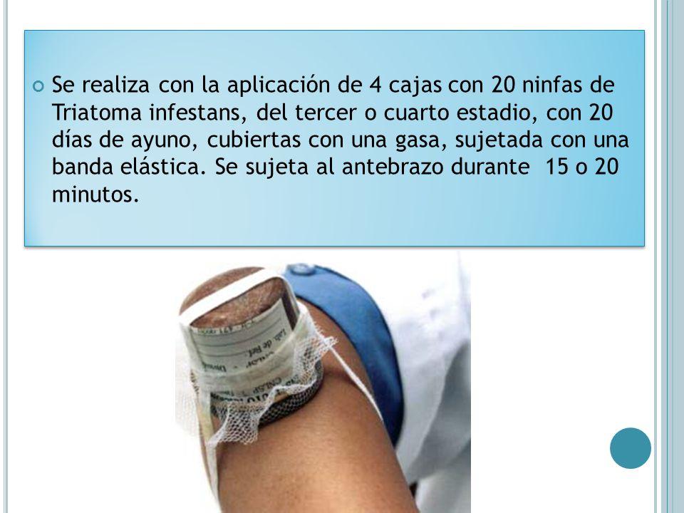 Se realiza con la aplicación de 4 cajas con 20 ninfas de Triatoma infestans, del tercer o cuarto estadio, con 20 días de ayuno, cubiertas con una gasa