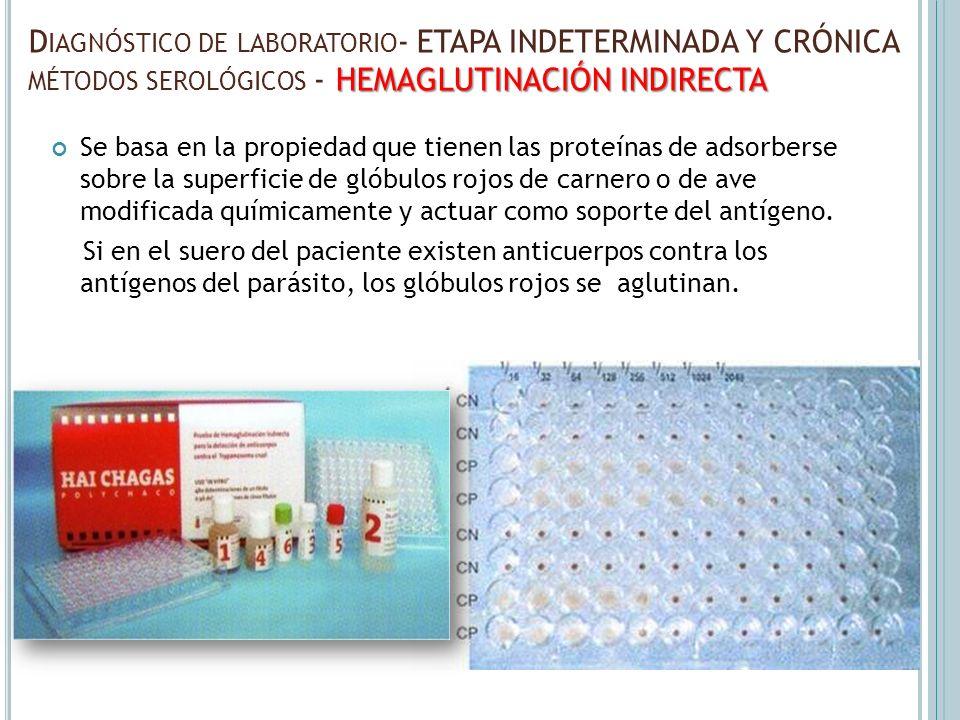 Se basa en la propiedad que tienen las proteínas de adsorberse sobre la superficie de glóbulos rojos de carnero o de ave modificada químicamente y act