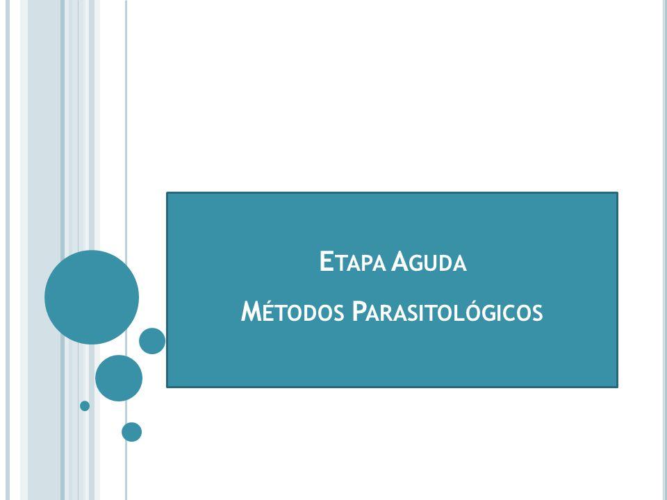 HEMOCULTIVO D IAGNÓSTICO DE LABORATORIO - ETAPA AGUDA MÉTODOS PARASITOLÓGICOS - HEMOCULTIVO C onsiste en sembrar una muestra de sangre en un medio de cultivo artificial y amplificar el número de parásitos.