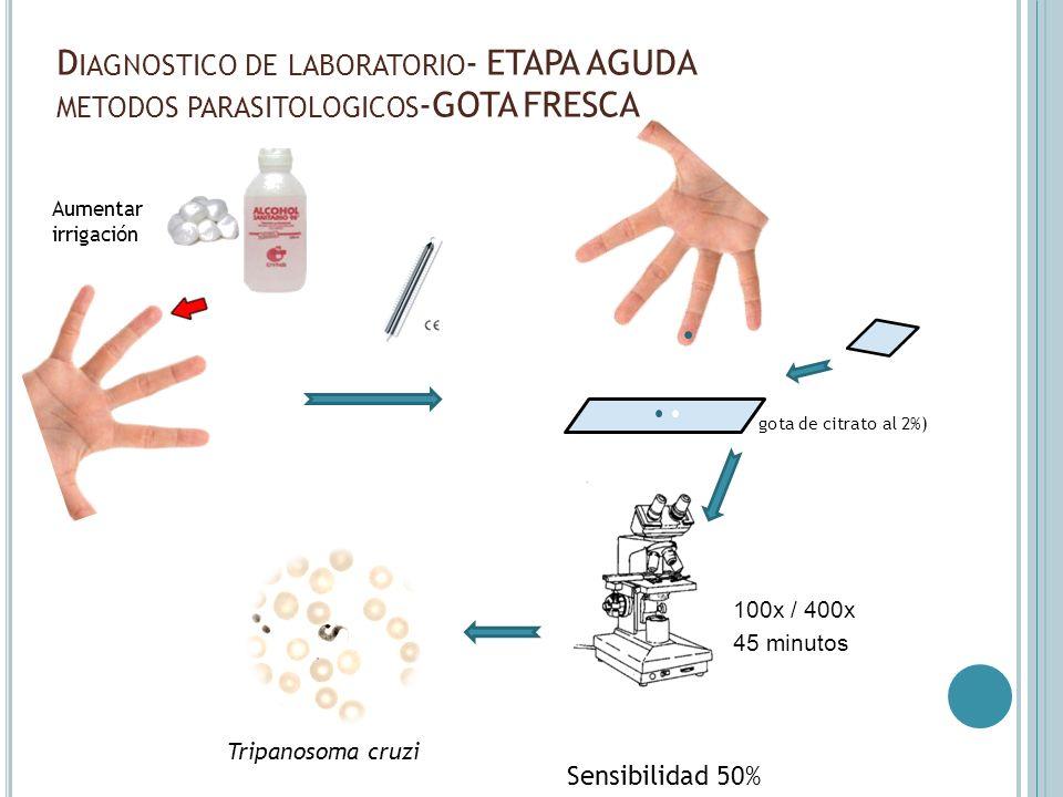 D IAGNOSTICO DE LABORATORIO - ETAPA AGUDA METODOS PARASITOLOGICOS -GOTA FRESCA Aumentar irrigación Sensibilidad 50% 100x / 400x gota de citrato al 2%)