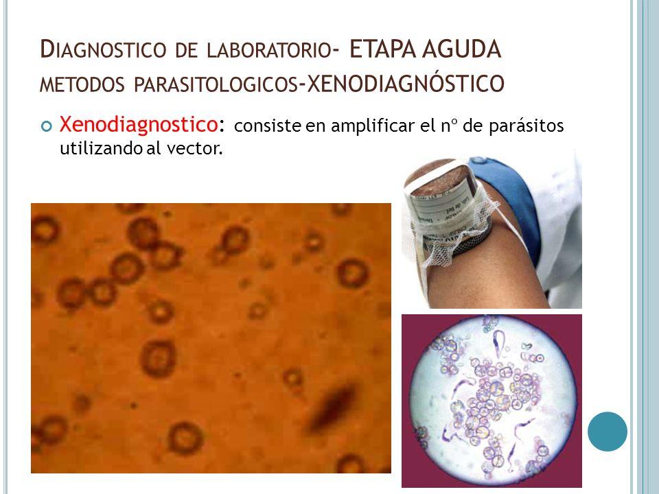 D IAGNOSTICO DE LABORATORIO - ETAPA AGUDA METODOS PARASITOLOGICOS - XENODIAGNÓSTICO Xenodiagnostico: consiste en amplificar el nº de parásitos utiliza
