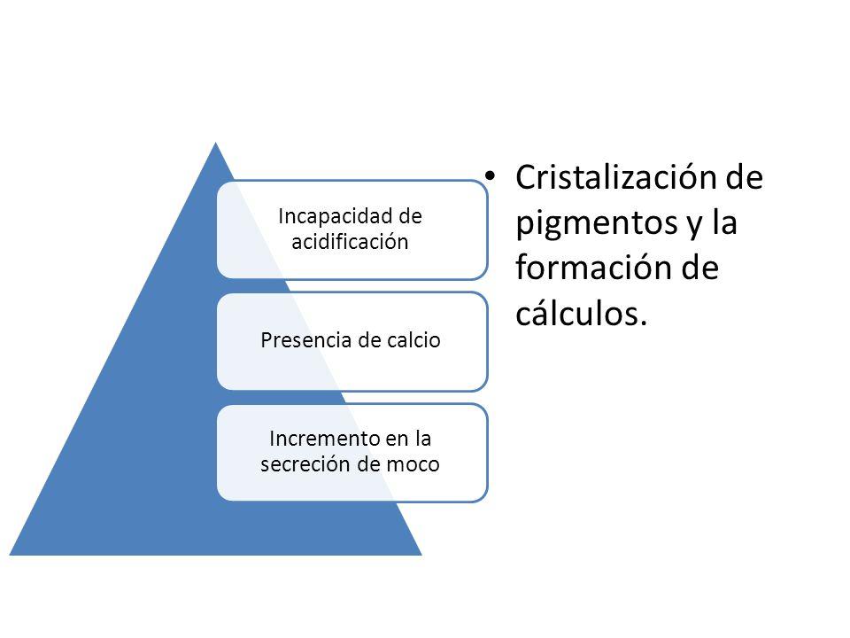 Incapacidad de acidificación Presencia de calcio Incremento en la secreción de moco Cristalización de pigmentos y la formación de cálculos.