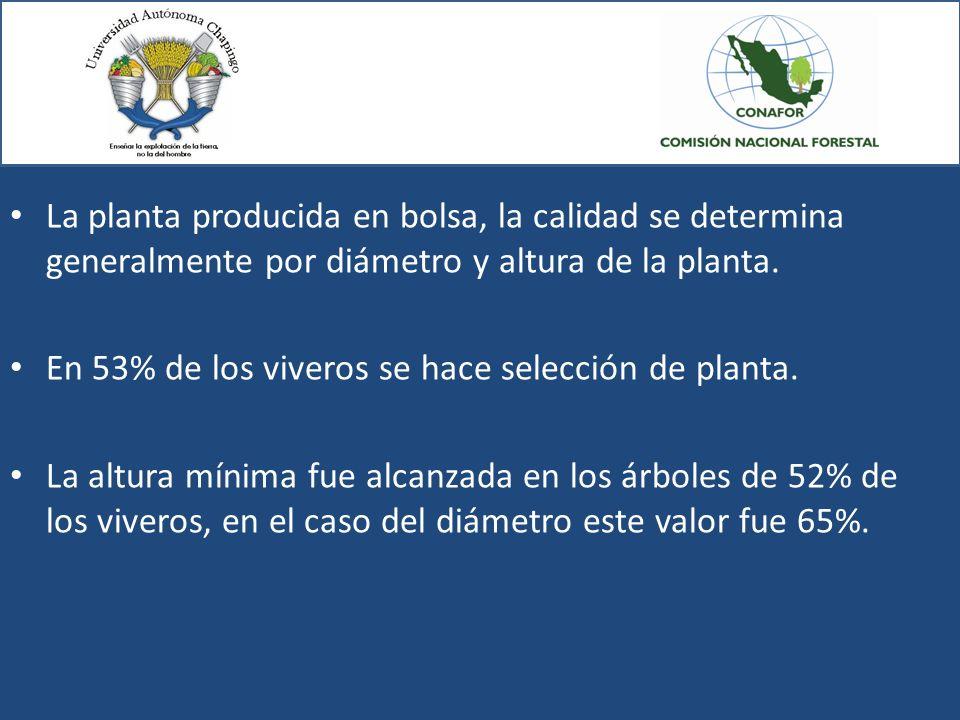 La planta producida en bolsa, la calidad se determina generalmente por diámetro y altura de la planta. En 53% de los viveros se hace selección de plan
