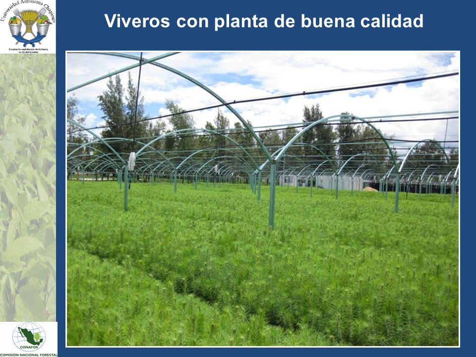 Viveros con planta de buena calidad