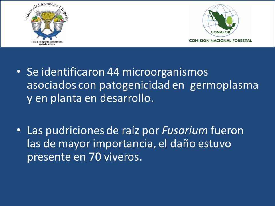 Se identificaron 44 microorganismos asociados con patogenicidad en germoplasma y en planta en desarrollo. Las pudriciones de raíz por Fusarium fueron