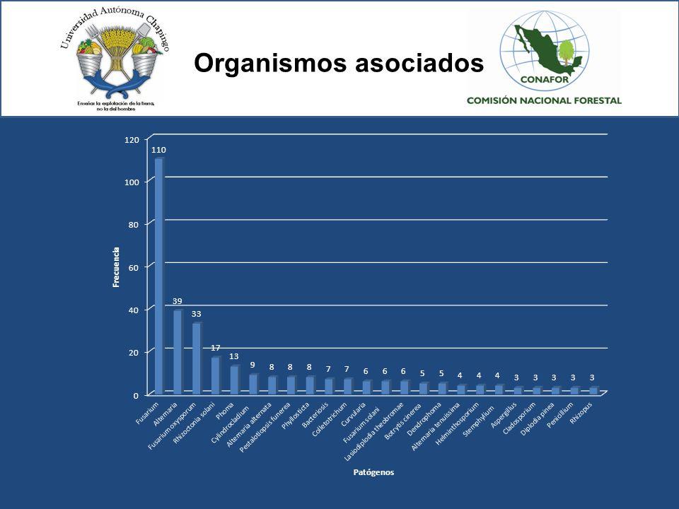 Organismos asociados