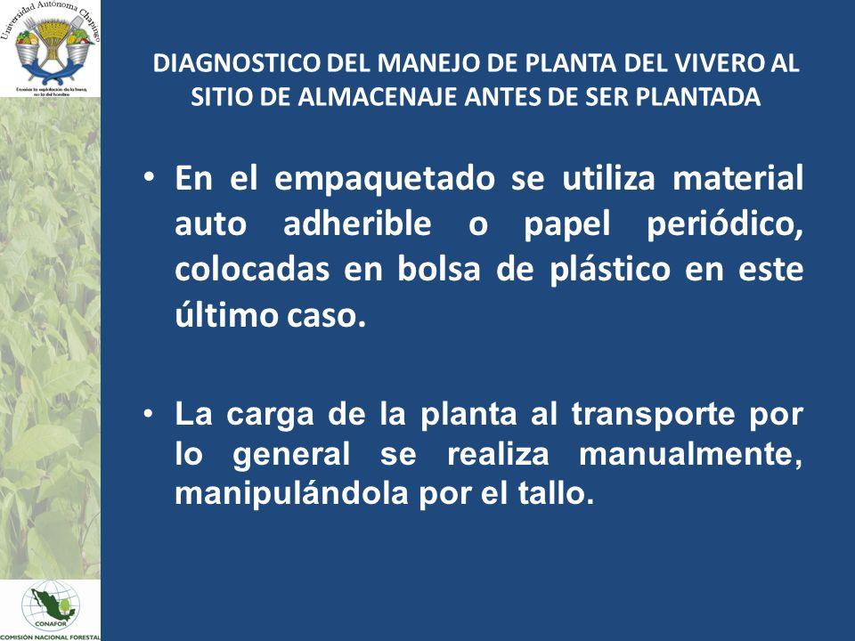 En el empaquetado se utiliza material auto adherible o papel periódico, colocadas en bolsa de plástico en este último caso. La carga de la planta al t