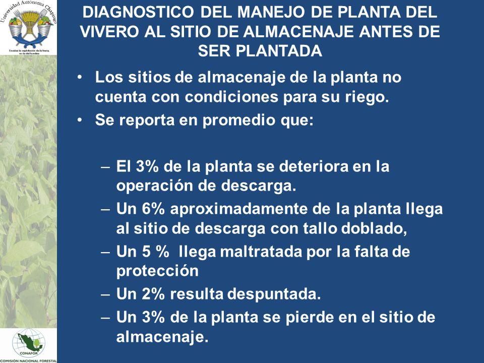 DIAGNOSTICO DEL MANEJO DE PLANTA DEL VIVERO AL SITIO DE ALMACENAJE ANTES DE SER PLANTADA Los sitios de almacenaje de la planta no cuenta con condicion