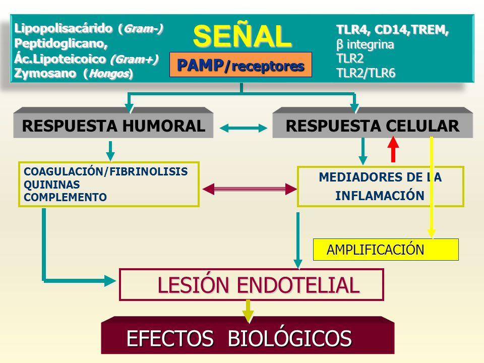 RESPUESTA HUMORAL RESPUESTA CELULAR LESIÓN ENDOTELIAL LESIÓN ENDOTELIAL SEÑAL TLR4, CD14,TREM, β integrina TLR2TLR2/TLR6 Lipopolisacárido (Gram-) Pept