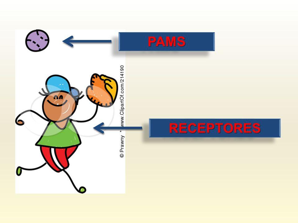 RECEPTORESRECEPTORES PAMSPAMS