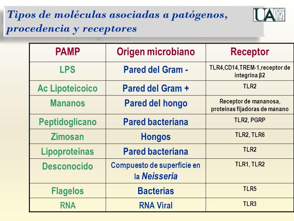 Tipos de moléculas asociadas a patógenos, procedencia y receptores PAMPOrigen microbianoReceptor LPSPared del Gram - TLR4,CD14,TREM-1,receptor de inte