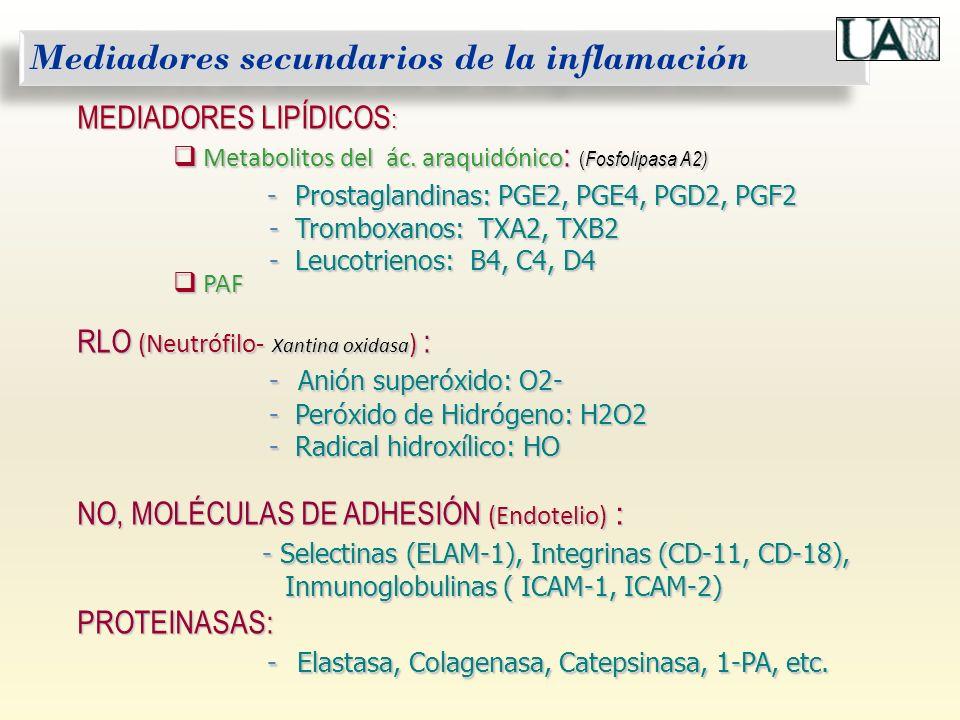 Mediadores secundarios de la inflamación MEDIADORES LIPÍDICOS : Metabolitos del ác. araquidónico : ( Fosfolipasa A2) Metabolitos del ác. araquidónico