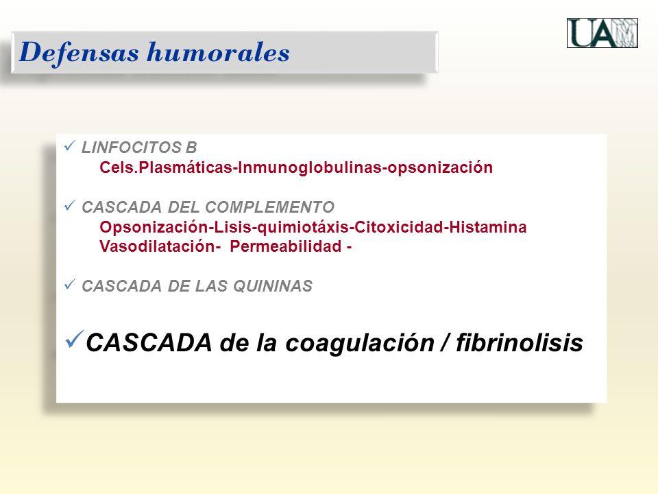 LINFOCITOS B Cels.Plasmáticas-Inmunoglobulinas-opsonización CASCADA DEL COMPLEMENTO Opsonización-Lisis-quimiotáxis-Citoxicidad-Histamina Vasodilatació