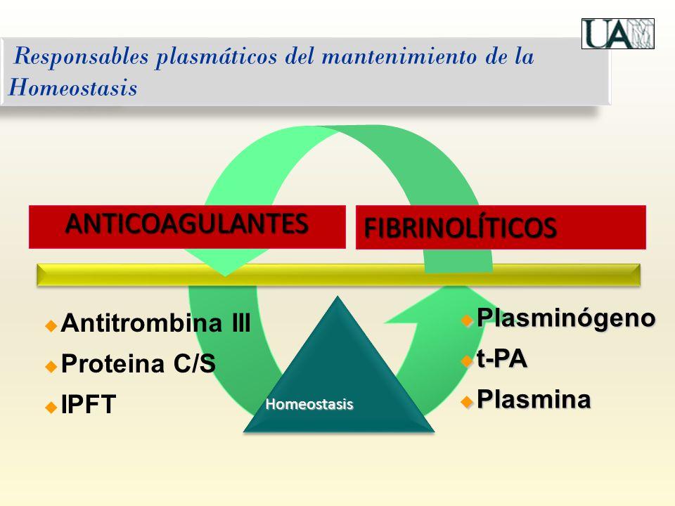 Responsables plasmáticos del mantenimiento de la Homeostasis Plasminógeno Plasminógeno t-PA t-PA Plasmina Plasmina Antitrombina III Proteina C/S IPFT