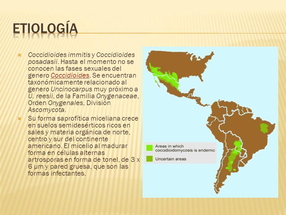 Coccidioides immitis y Coccidioides posadasii. Hasta el momento no se conocen las fases sexuales del genero Coccidioides. Se encuentran taxonómicament