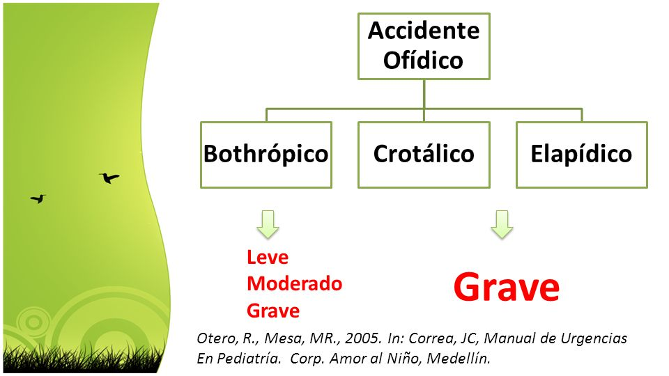 Accidente Ofídico BothrópicoCrotálicoElapídico Grave Leve Moderado Grave Otero, R., Mesa, MR., 2005. In: Correa, JC, Manual de Urgencias En Pediatría.