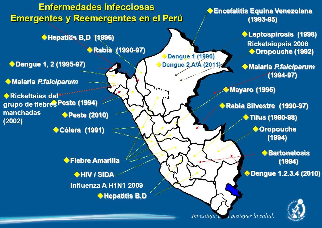 Enfermedades Infecciosas Emergentes y Reemergentes en el Perú Encefalitis Equina Venezolana Encefalitis Equina Venezolana(1993-95) Dengue 1 (1990) Dengue 1 (1990) Leptospirosis (1998) Leptospirosis (1998) Oropouche (1992) Oropouche (1992) Malaria P.falciparum Malaria P.falciparum (1994-97) (1994-97) Rabia (1990-97) Rabia (1990-97) Hepatitis B,D (1996) Hepatitis B,D (1996) Dengue 1, 2 (1995-97) Dengue 1, 2 (1995-97) Malaria P.falciparum Malaria P.falciparum Peste (1994) Peste (1994) Cólera (1991) Cólera (1991) Fiebre Amarilla Fiebre Amarilla HIV / SIDA HIV / SIDA Hepatitis B,D Hepatitis B,D Mayaro (1995) Mayaro (1995) Rabia Silvestre (1990-97) Rabia Silvestre (1990-97) Tifus (1990-98) Tifus (1990-98) Oropouche Oropouche(1994) Bartonelosis Bartonelosis(1994) Rickettsias del grupo de fiebres manchadas (2002) Influenza A H1N1 2009 Ricketsiopsis 2008 Oropouche 2010 Dengue 2 A/A (2011) Dengue 2 A/A (2011) Peste (2010) Peste (2010) Dengue 1.2.3.4 (2010) Dengue 1.2.3.4 (2010)