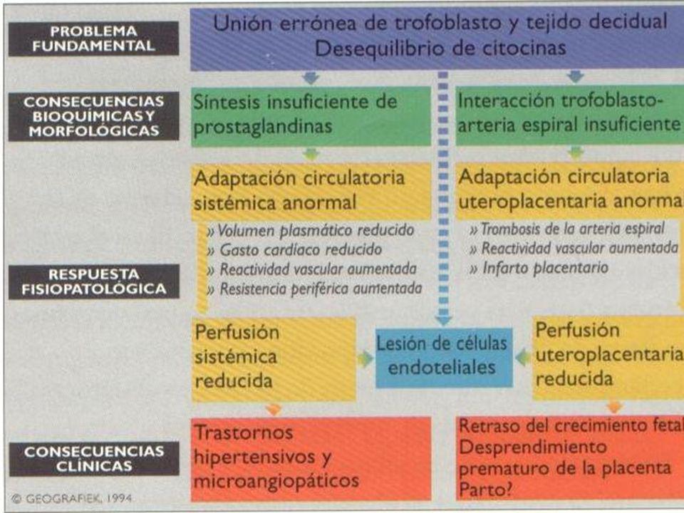 MANEJO Coloides: –Dextran –Almidón Obligado –Gelatina Magnesio Antihipertensivo PRN Anticomiciales PRN