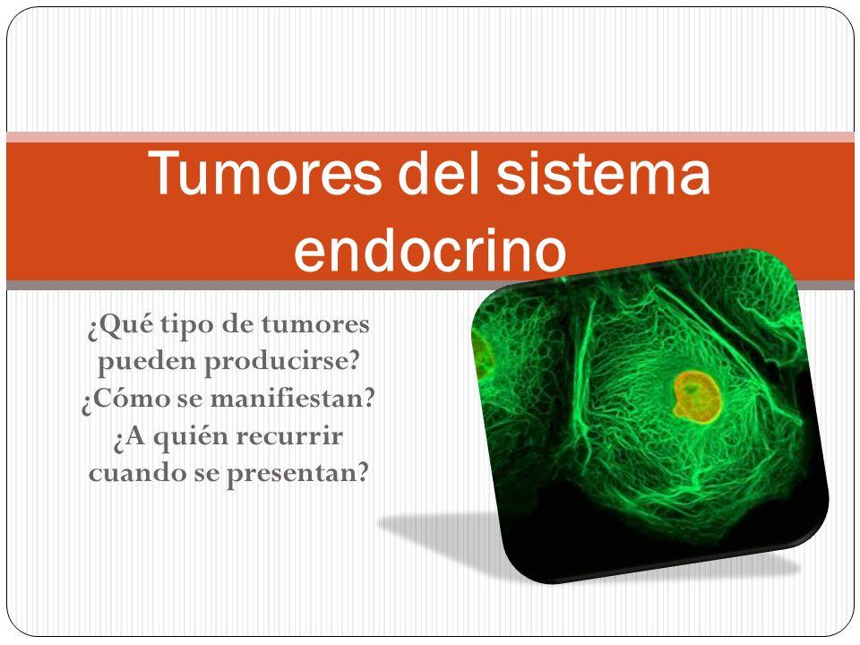 ¿Qué tipo de tumores pueden producirse? ¿Cómo se manifiestan? ¿A quién recurrir cuando se presentan? Tumores del sistema endocrino