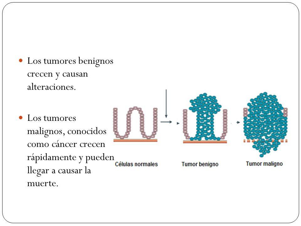 Los tumores benignos crecen y causan alteraciones. Los tumores malignos, conocidos como cáncer crecen rápidamente y pueden llegar a causar la muerte.