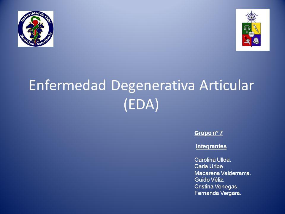 Enfermedad Degenerativa Articular (EDA) Grupo n° 7 Integrantes Carolina Ulloa.