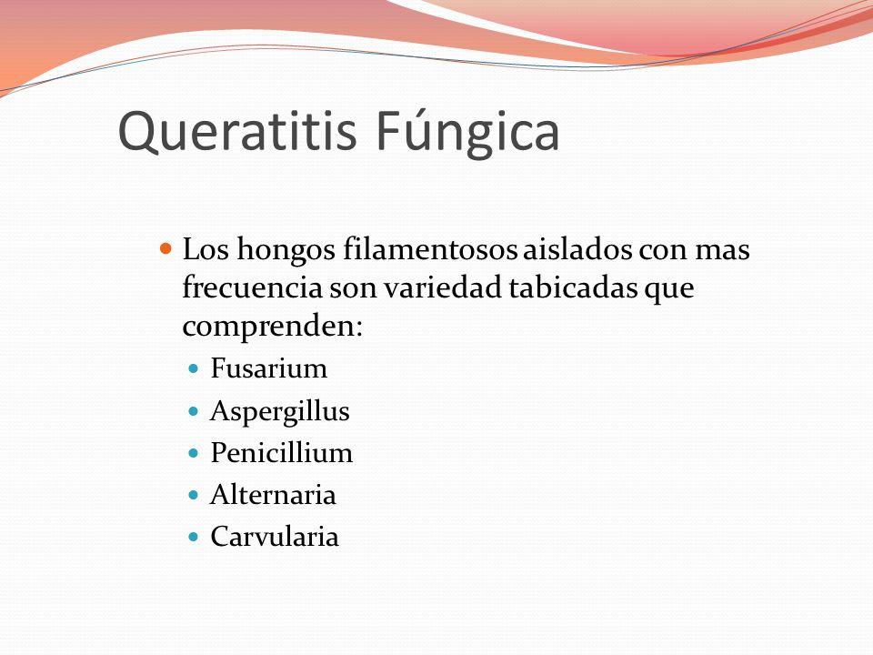 Los hongos filamentosos aislados con mas frecuencia son variedad tabicadas que comprenden: Fusarium Aspergillus Penicillium Alternaria Carvularia Queratitis Fúngica