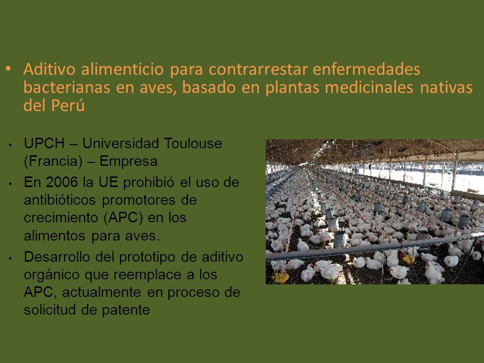 Aditivo alimenticio para contrarrestar enfermedades bacterianas en aves, basado en plantas medicinales nativas del Perú UPCH – Universidad Toulouse (F