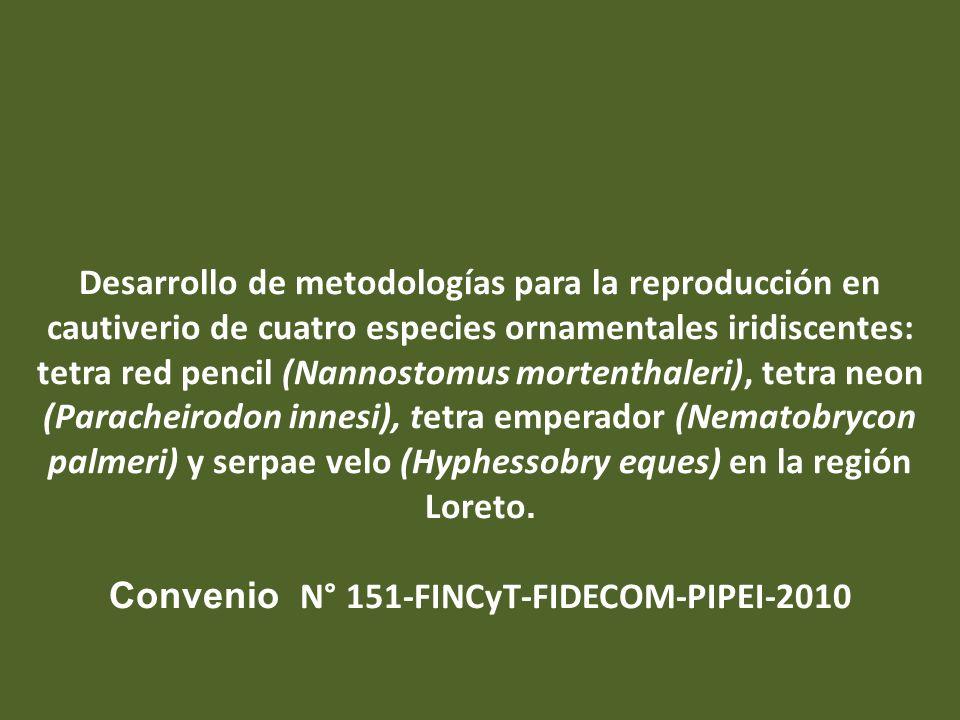 Desarrollo de metodologías para la reproducción en cautiverio de cuatro especies ornamentales iridiscentes: tetra red pencil (Nannostomus mortenthaler