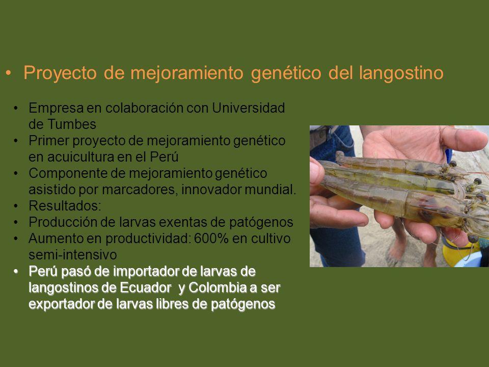 Proyecto de mejoramiento genético del langostino Empresa en colaboración con Universidad de Tumbes Primer proyecto de mejoramiento genético en acuicul