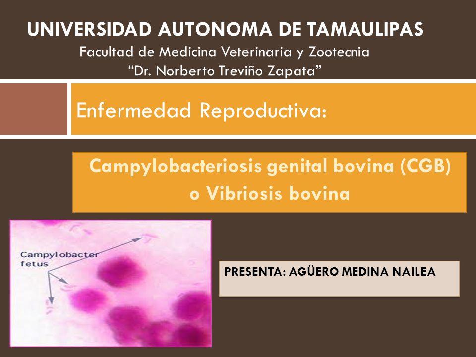 Campylobacteriosis genital bovina (CGB) o Vibriosis bovina Enfermedad Reproductiva: PRESENTA: AGÜERO MEDINA NAILEA UNIVERSIDAD AUTONOMA DE TAMAULIPAS