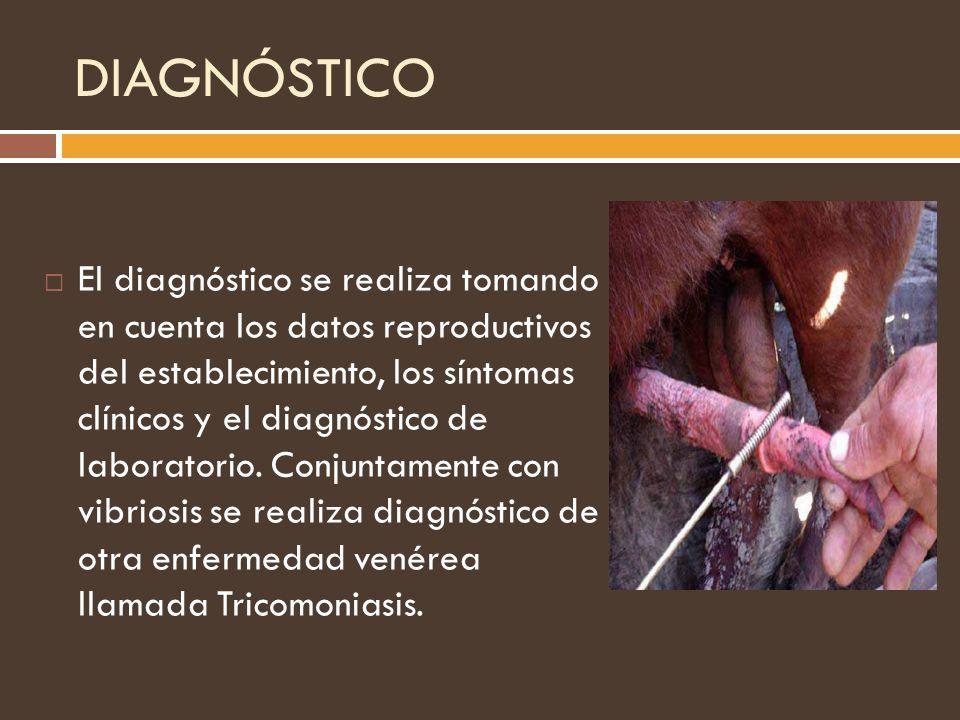 DIAGNÓSTICO El diagnóstico se realiza tomando en cuenta los datos reproductivos del establecimiento, los síntomas clínicos y el diagnóstico de laborat