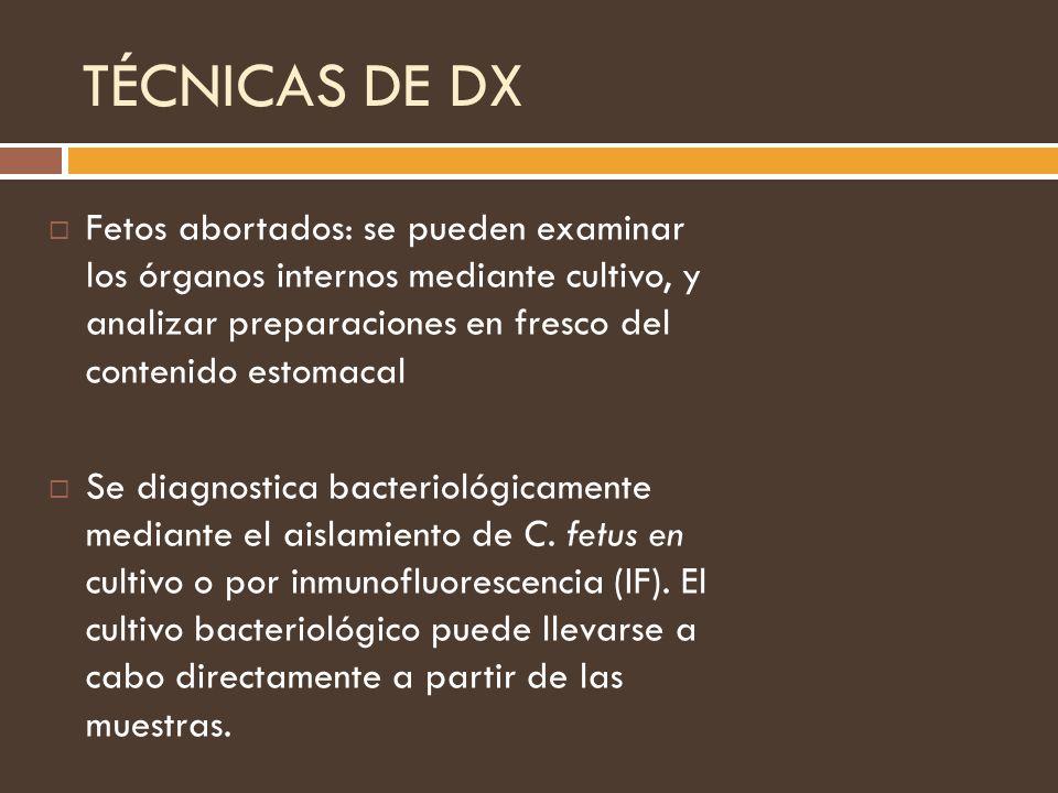 TÉCNICAS DE DX Fetos abortados: se pueden examinar los órganos internos mediante cultivo, y analizar preparaciones en fresco del contenido estomacal S