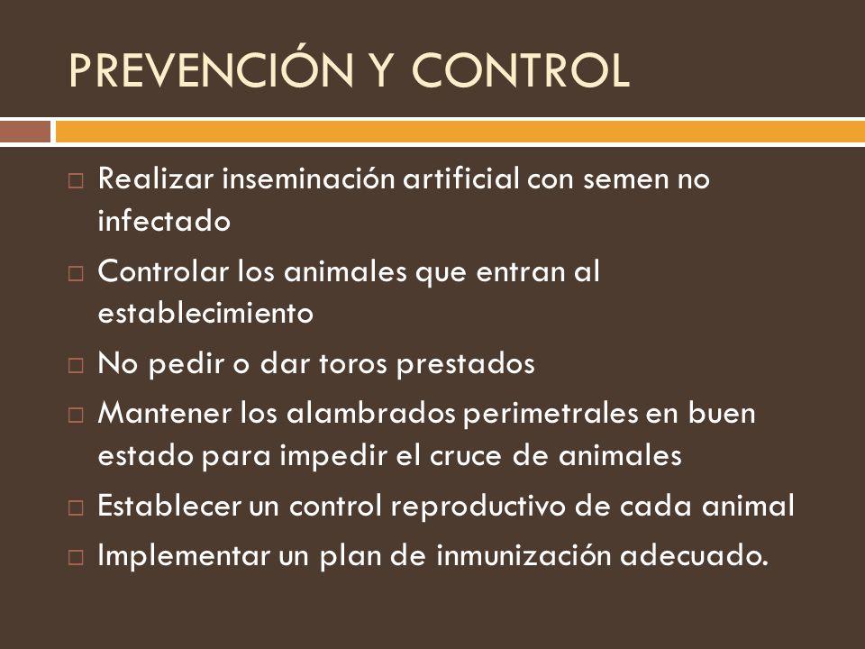 PREVENCIÓN Y CONTROL Realizar inseminación artificial con semen no infectado Controlar los animales que entran al establecimiento No pedir o dar toros
