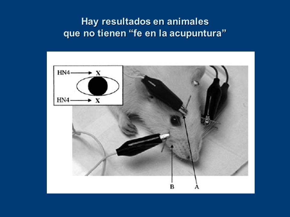 Hay resultados en animales que no tienen fe en la acupuntura