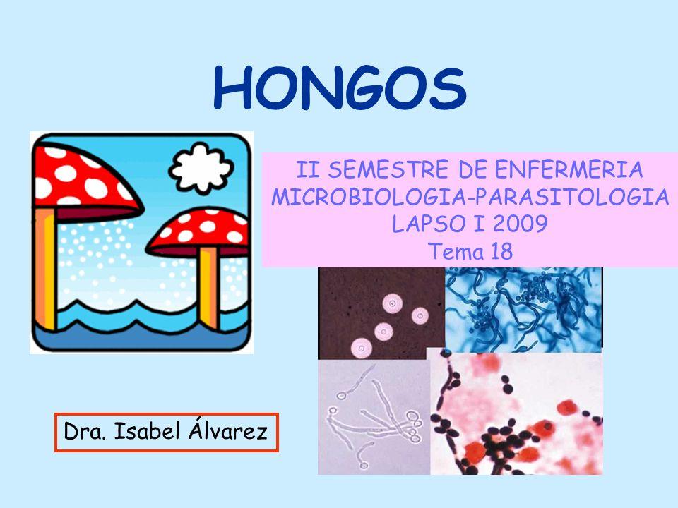 HONGOS II SEMESTRE DE ENFERMERIA MICROBIOLOGIA-PARASITOLOGIA LAPSO I 2009 Tema 18 Dra. Isabel Álvarez
