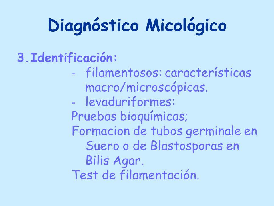 Diagnóstico Micológico 3.Identificación: - filamentosos: características macro/microscópicas. - levaduriformes: Pruebas bioquímicas; Formacion de tubo