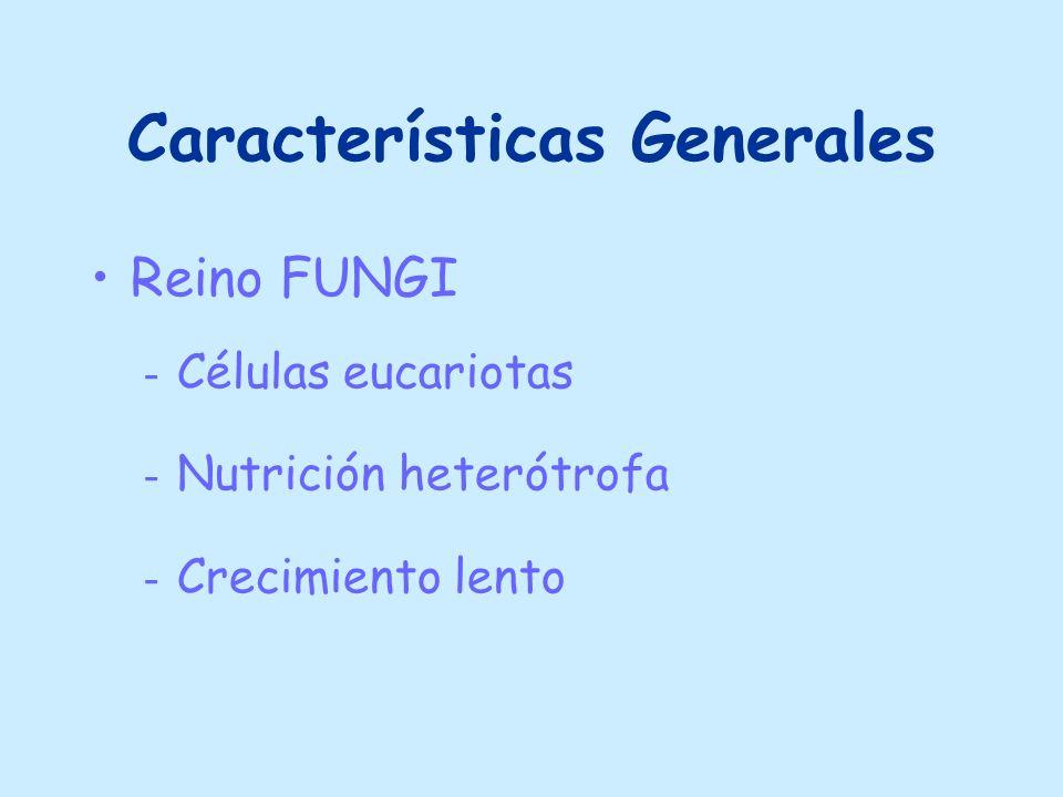 Características Generales Reino FUNGI - Células eucariotas - Nutrición heterótrofa - Crecimiento lento