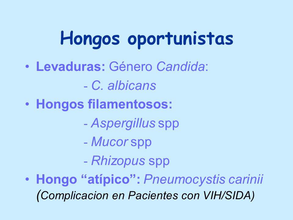 Hongos oportunistas Levaduras: Género Candida: - C. albicans Hongos filamentosos: - Aspergillus spp - Mucor spp - Rhizopus spp Hongo atípico: Pneumocy