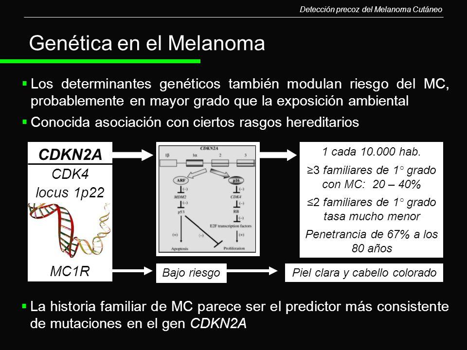 Los determinantes genéticos también modulan riesgo del MC, probablemente en mayor grado que la exposición ambiental Conocida asociación con ciertos ra