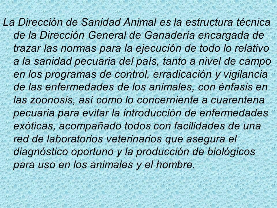 QUÉ SOMOS (La Estructura de Sanidad Animal en la República Dominicana) La Dirección General de Ganadería es la dependencia de la Secretaría de Estado