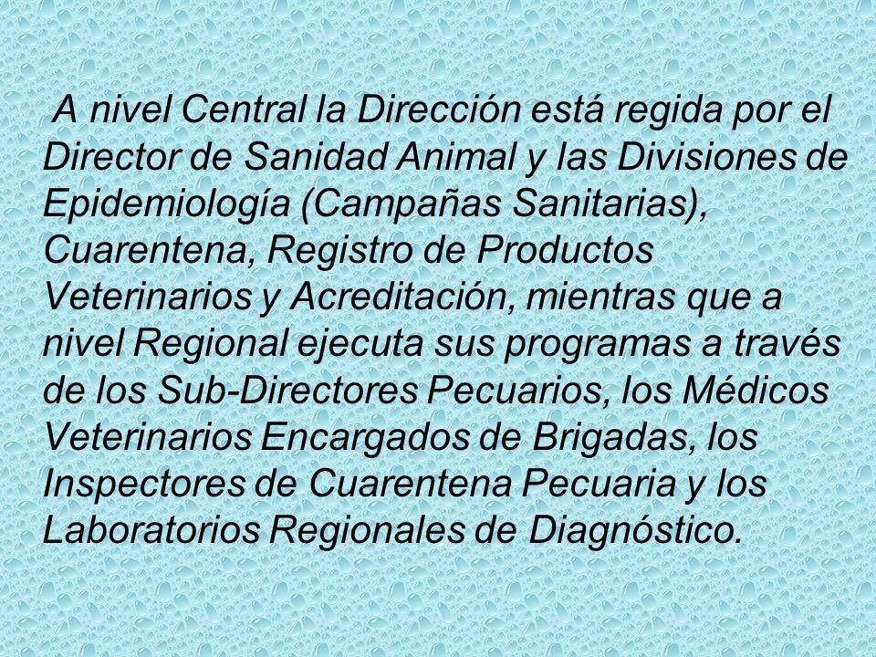 La Dirección de Sanidad Animal es la estructura técnica de la Dirección General de Ganadería encargada de trazar las normas para la ejecución de todo