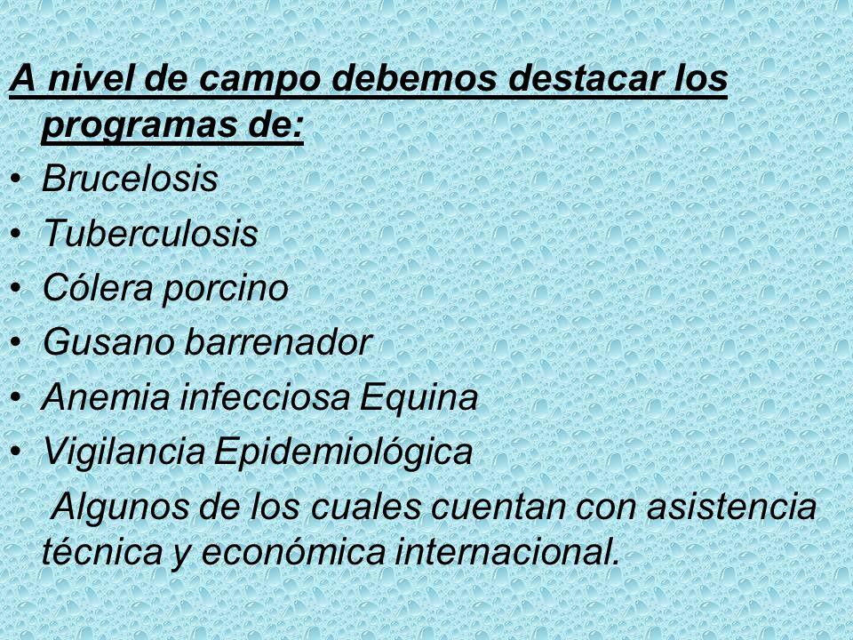 A nivel Central la Dirección está regida por el Director de Sanidad Animal y las Divisiones de Epidemiología (Campañas Sanitarias), Cuarentena, Regist
