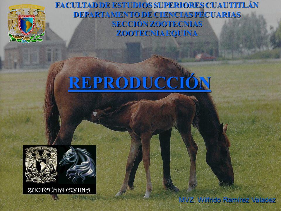 REPRODUCCIÓN FACULTAD DE ESTUDIOS SUPERIORES CUAUTITLÁN DEPARTAMENTO DE CIENCIAS PECUARIAS SECCIÓN ZOOTECNIAS ZOOTECNIA EQUINA MVZ. Wilfrido Ramírez V