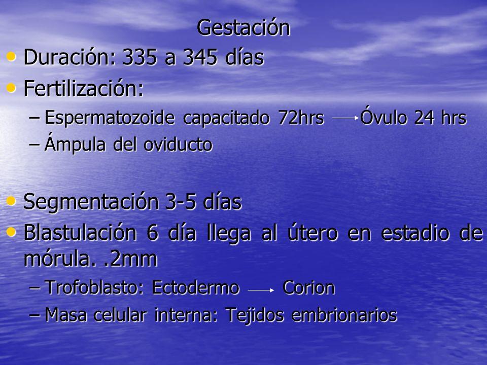 Gestación Duración: 335 a 345 días Duración: 335 a 345 días Fertilización: Fertilización: –Espermatozoide capacitado 72hrs Óvulo 24 hrs –Ámpula del ov