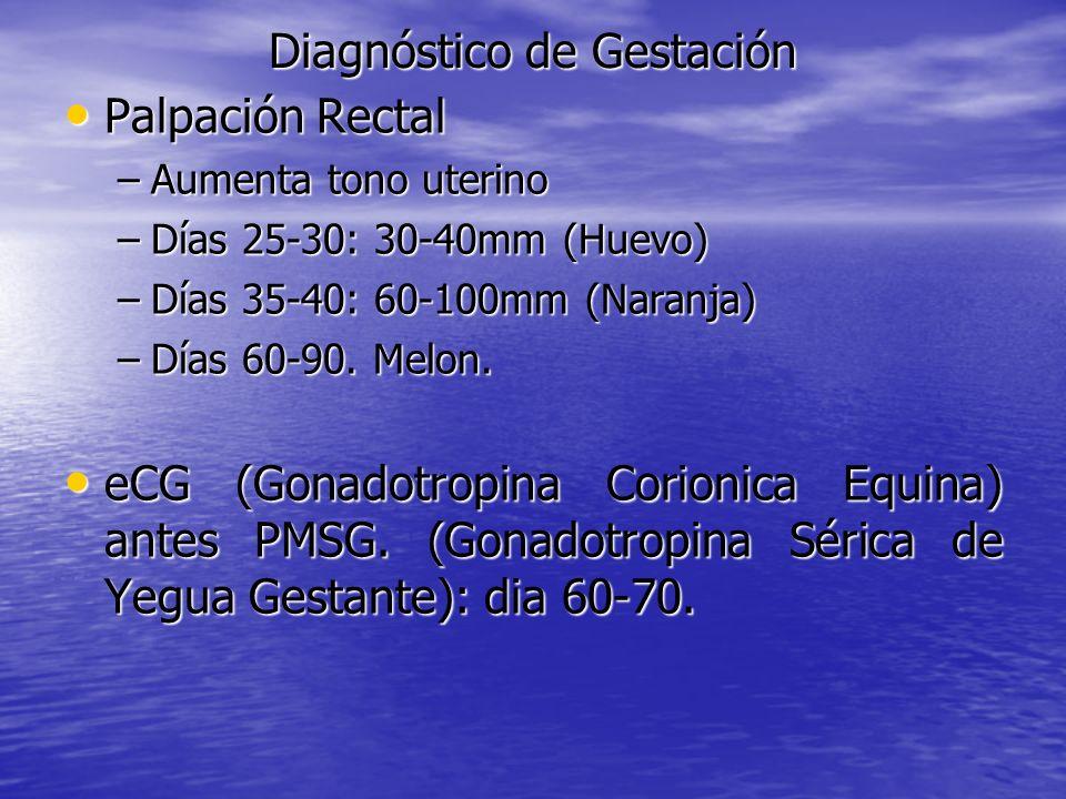 Diagnóstico de Gestación Palpación Rectal Palpación Rectal –Aumenta tono uterino –Días 25-30: 30-40mm (Huevo) –Días 35-40: 60-100mm (Naranja) –Días 60