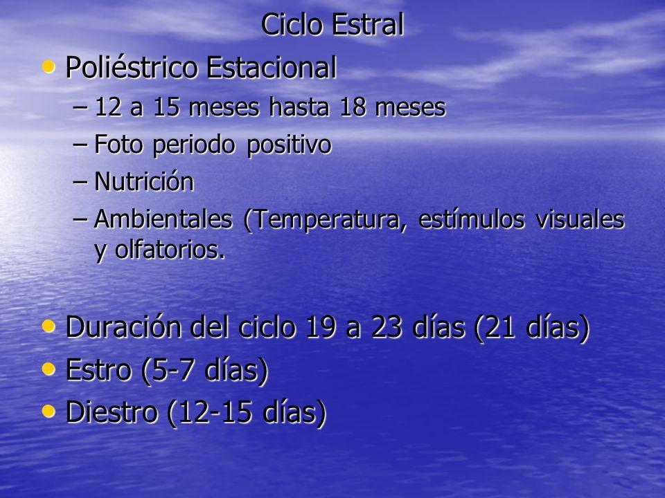 Ciclo Estral Poliéstrico Estacional Poliéstrico Estacional –12 a 15 meses hasta 18 meses –Foto periodo positivo –Nutrición –Ambientales (Temperatura,