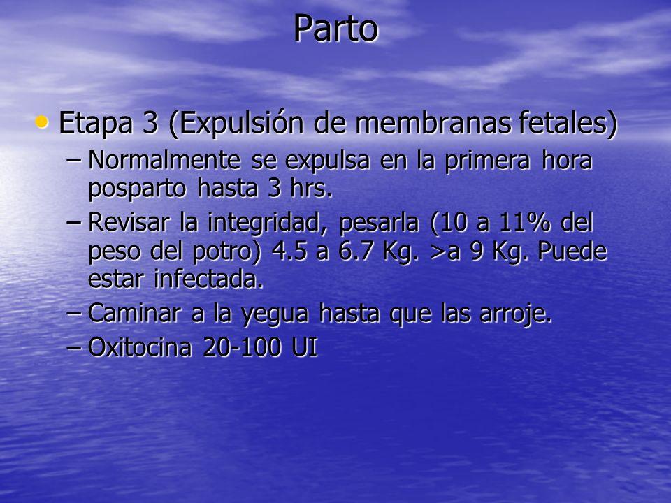 Parto Etapa 3 (Expulsión de membranas fetales) Etapa 3 (Expulsión de membranas fetales) –Normalmente se expulsa en la primera hora posparto hasta 3 hr