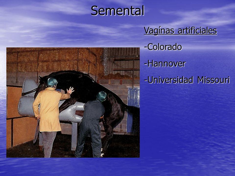 Semental Vagínas artificiales -Colorado -Hannover -Universidad Missouri